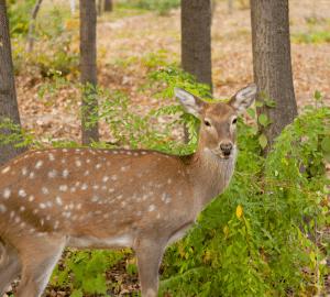 deer by tree