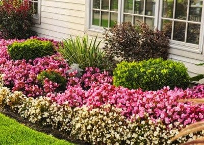 Flower beds with bushes