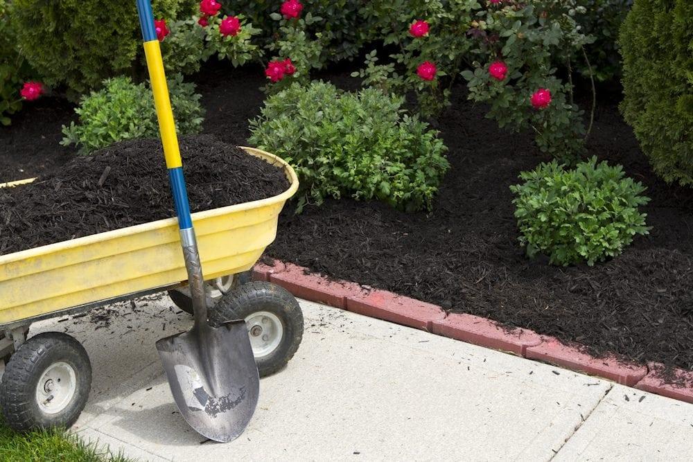 mulching flowerbed