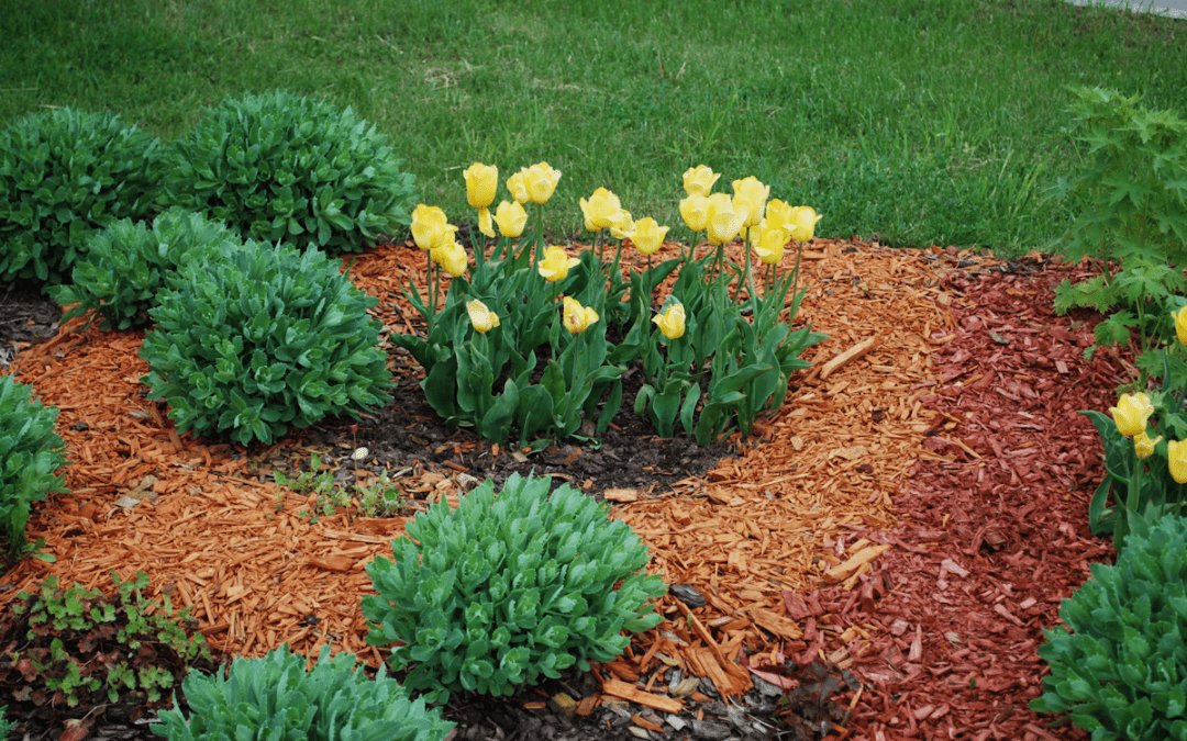 Perennial Flowers and Plants to Make Any Yard Beautiful